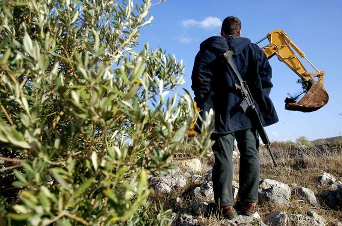 Palestine - des Oliviers pour la Paix