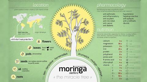 Le Moringa – Arbre de Vie