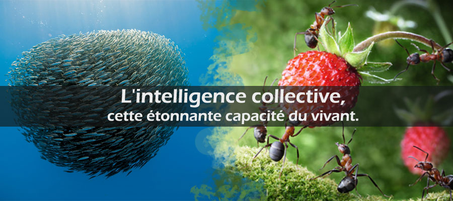 photo : l'intelligence collective chez les animaux