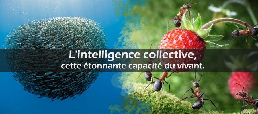 photo : l'intelligence collective chez les animaux